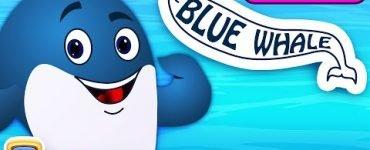 Baby Blue whale Song Lyrics Chuchu TV